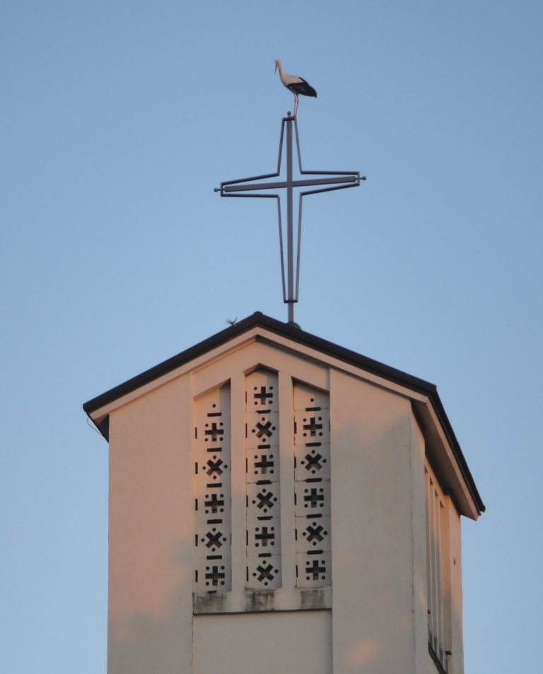 Storch auf dem Kirchturm... (Foto:A.E.)